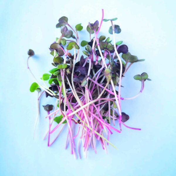 микрорастения Репичка Рамбо